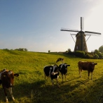 A typical Dutch scene.